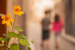 25/52 De espaldas (Nathalie Le Bris) Tags: blur flower primavera fleur spring dof child bokeh flor enfant nio printemps frescor fraicheur cret