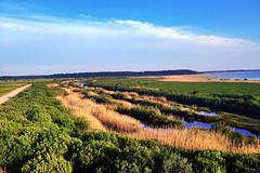Beauty in simplicity. (Inga P.) Tags: summer nature landscape natural country meadows sunny bluesky lakeside clearsky