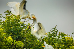 _80A0179-92 (cynaZZam photOGraphy) Tags: pink white galveston nature birds canon outdoors texas sanctuary avian spoonbills egrets highisland cynazzam
