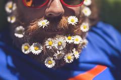 beard jenga... (CatMacBride) Tags: summer lensbaby beard velvet snooze daisy 56