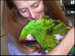 Sad News For World Parrot Refuge (zenseas : )) Tags: rescue canada memorial bc britishcolumbia parrot wendy sanctuary coombs worldparrotrefuge avianrescue wendyhuntbatch