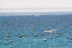 Take off (foveras13) Tags: blue sea bird animal nikon outdoor seagull athens greece nikkor salamina 55300 d5200