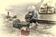 Harvesting Oysters 5 (Artypixall) Tags: woman sepia vietnam oysters raft desaturated halongbay unloading