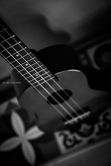 Ukulele (BAndreoli) Tags: blackandwhite music flower art composition contrast neck square ukulele fineart culture diagonal indoors strings decor