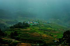 Misty Morning (habeebrahmanphotography) Tags: morning travel india mist tourism nature misty landscape photography tour kerala munnar idukki