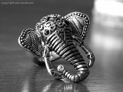 Elephant (aml alzahrani) Tags: elephant ring com فيل نسيان خاتم أحلام مستغانمي روايه