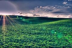 waveS (niK10d) Tags: green waves pearl siena jam nearby amongst 31mm pentaxk10d mygearandme mygearandmepremium mygearandmebronze