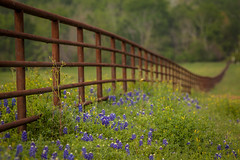 Rust covered country fence (Mabry Campbell) Tags: flowers flower nature photography march countryside spring texas 100 wildflowers f56 hillcountry 2012 200mm chappellhill texashillcountry washingtoncounty ef200mmf28liiusm sec mabrycampbell march242012 201203246333