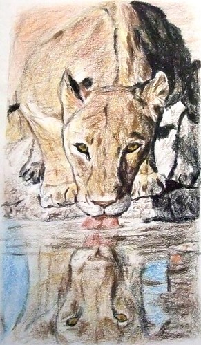 Reflection in the water: a lion drinking