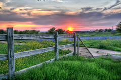 At the Gate of the Bluebonnet Field (Ronnie Wiggin) Tags: flowers trees sunset usa nature sunrise fence landscape spring nikon gate texas country wildflowers bluebonnets springtime fenceline d300 bloomingflowers texasbluebonnets nikond300 rwigginphotos ronniewiggin ronniewiggin