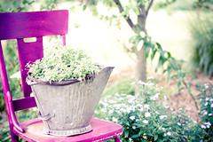 (StephanieMcArthur) Tags: garden bucket chair purple antique painted decor