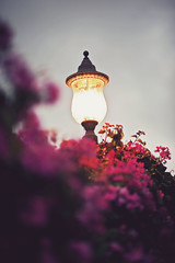 (schaharazad) Tags: california pink flowers sunset sky color lamp photo streetlight san colorful diego