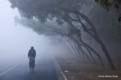 The Adventure of the Solitary Cyclist (Shubh M Singh) Tags: road morning blue trees winter mist cold monochrome bicycle silhouette fog nikon cyclist jan walk bad single cycle simplicity minimalism nikkor marg ghostly solitary chandigarh woolens