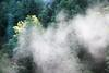Steam (Federico Ravassard) Tags: mountain tree fog alberi forest canon steam acqua montagna federico foresta cascata 550d ravassard