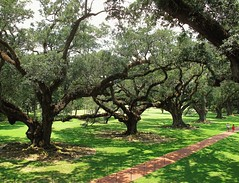 Old oaks (fran001@yahoo.com) Tags: usa louisiana neworleans plantation oaks oakvalley