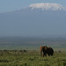 elephant and kili