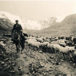 Auftrieb / Cattle drive up