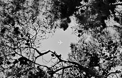 Intolerable travelling (Behzad No) Tags: bw black tree airplane iran emirates shiraz airlines nikond90 behzadno