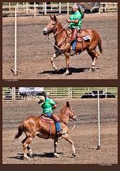 Coming and going (walla2chick) Tags: race washington pole wa dayton mule sombero 25012 muledays brownmule topazadjust