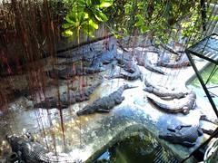 DSC04050 (wanderstrucktravelandtours) Tags: palawanwildliferescueandconservationcenter palawancitytour crocodilefarmpalawan cheappuertopricesatourpackages puertoprincesa2012cheaptourpackages puertoprincesa2012tourpackages puertoprincesaattractions puertoprinsesacheaptourpackages2012 crocodilefarminstitute wanderstrucktravelandtours