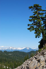 Tree over Blum (Sotosoroto) Tags: snow mountains washington hiking cascades mtbaker dayhike parkbutte