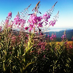 Morning mountains and Fire Lilly's (Double B Photography) Tags: square lofi squareformat iphoneography instagramapp uploaded:by=instagram