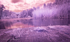 Purple reeds (XyrisKenn) Tags: longexposure travel lake holiday tourism nature canon europe czech prague eu praha romance infrared czechrepublic lightroom canon1740mmf4 t2i canon550d canoneos550d canon1740efl canon1740lcanoneos550d