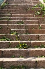 Treppe an der Genzmer Brcke (julia_HalleFotoFan) Tags: treppe taraxacum lwenzahn