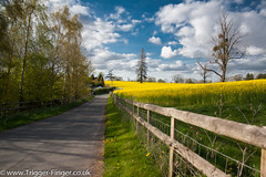 Stratford Upon Avon (G Cullen) Tags: trees sky tree green yellow fence rapeseed