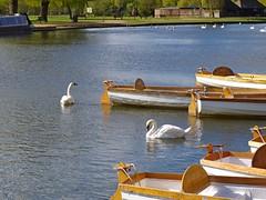 1245-32L (Lozarithm) Tags: boats swans canoes rivers 1770 stratforduponavon riveravon k50 smcpda1770mmf4alifsdm pentaxzoom