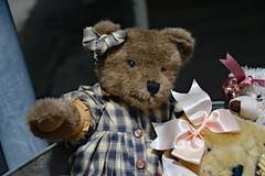 Happy Teddy Bear Tuesday! (BKHagar *Kim*) Tags: bear cute animal toy teddy fuzzy sweet gingham teddybear stuffedanimal friendly bkhagar