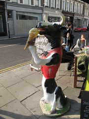 Cow eating an icecream (duncan) Tags: cow icecream nottinghill