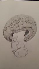 image (Art & illustration by Kerry) Tags: food white black mushroom sketch drawing lead tonal realistic