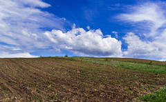 blajini natura-1909 (maritoieugeniu) Tags: flowers blue trees sky green fauna clouds landscape landscapes earth land agriculture cloudscapes moldova skyporn radeni