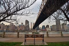 Roosevelt Island, 12.12.15 (gigi_nyc) Tags: nyc newyorkcity eastriver queensborobridge rooseveltisland