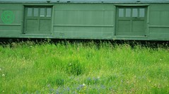 outdoors green doors (Kennuth) Tags: canada grass train newbrunswick hillsborough
