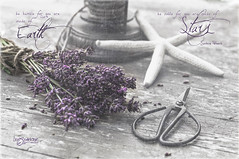 Be Humble - Be Noble (Imagemakercan - The Lensdancer) Tags: flowers summer stilllife fineart lavender porch seastar joygerow