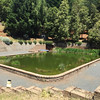 Camp and Sons, Willits, California (Rusty Blazenhoff) Tags: campandsons swimmingpond naturalpond cooloff willits california