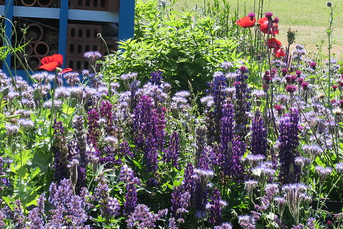 Bee Garden Silloth