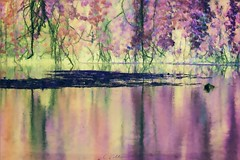 At the water lily pond (broombesoom) Tags: water manipulated see pond waterlily digitalart impressionism teich seerosen seerosenteich impressionismus