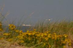 Belgian coast (Natali Antonovich) Tags: sea bird nature water landscape boat seaside seagull horizon northsea seashore seasideresort belgiancoast wenduine seaboard