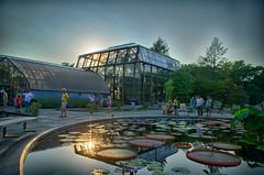 Longwood Gardens -30 (Webtraverser) Tags: gardens waterlily waterlilies longwoodgardens magichour sunsetting d7000