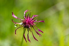 IMG_0701-241 (Martin1104) Tags: fotografie natuur bergen landschap vlinders yagodina snp bulgarije natuurfotografie natuurreis