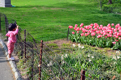 Barred. (Rachel Citron) Tags: nyc newyorkcity pink green nature spring tulips centralpark indian streetphotography tony gothamist popular curbed uppereastside thenewyorktimes travelguide boatpond timeoutnewyork centralparkconservancy newyorkcityparks littlegirlinpink thenytimes thelocaleastvillage weekendmiser bestplacesincentralpark