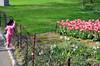 Barred. (Rachel Citron) Tags: nyc newyorkcity pink green nature spring tulips centralpark indian streetphotography tony gothamist popular curbed uppereastside thenewyorktimes travelguide boatpond timeoutnewyork centralparkconservancy newyorkcityparks littlegirlinpink thenytimes thelocaleastvillage weekendmiser bestplacesincentralpark