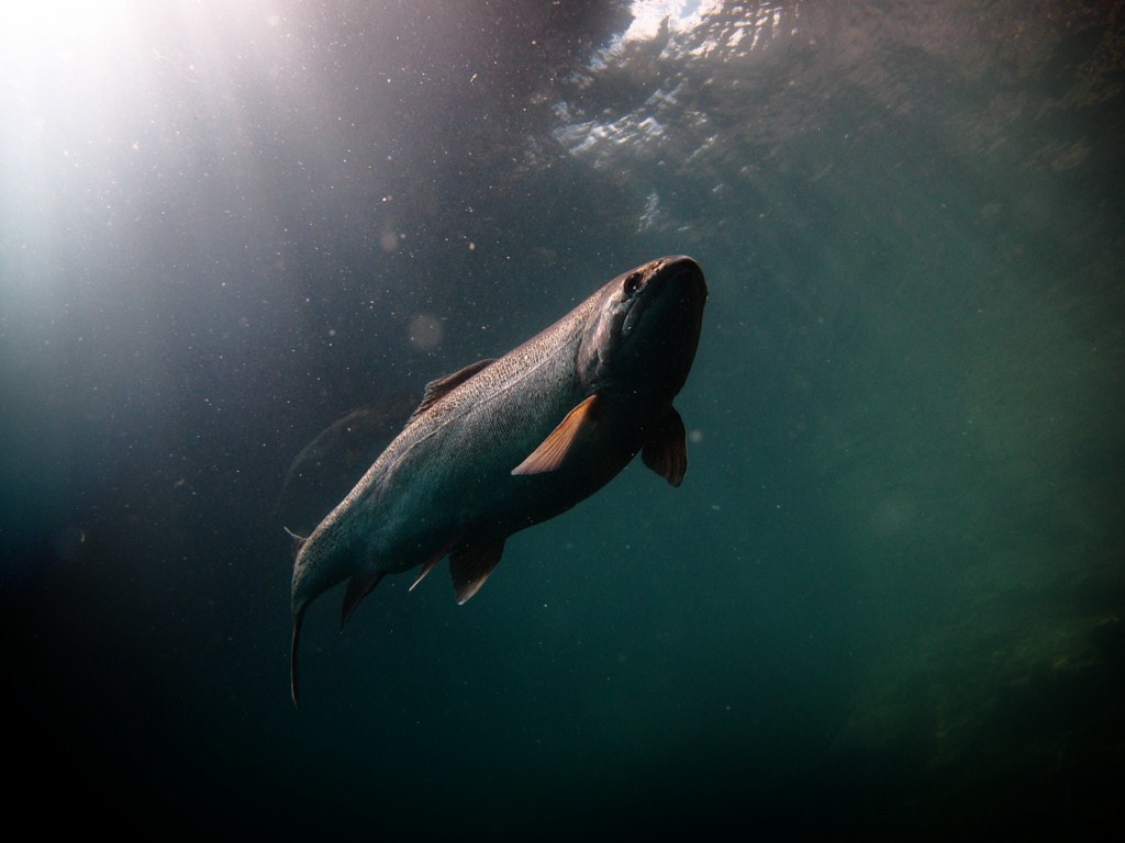 The world 39 s most recently posted photos of armored and for Is a fish wet