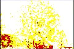 SDIM0034_heatmap (bitte namen eingeben) Tags: abstract ir thermal heatmap thermisch falschfarben