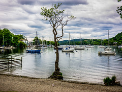 rnor1185.jpg (Robert Norbury) Tags: trees tree landscape photography streetphotography photograph cumbria psychogeography thelakes fineartphotography thelakedistrict robertnorbury artistsontumblr woodmilim viaductsheeplakes