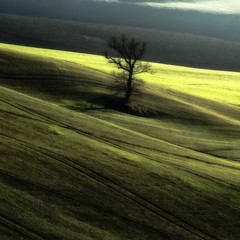 Standing alone (chichetto) Tags: italy panorama colors landscapes countryside nikon softness shades campagna giallo fields poesia camper colori marche campi lemarche panorami agricoltura standingalone photographia alonetree d7000 chichetto panoramafotogrfico icoloridellaterra paesaggimarchigiani campiinfiore bestcapturesaoi nikond7000 magicunicornverybest magicunicornmasterpiece elitegalleryaoi rambona vermeerpearls wellcomeinparadise evanescents paseggimarchigiani