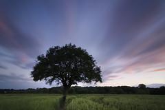 Wind, Clouds & Sunset (Pete Rocks) Tags: summer tree nikon long exposure 10 110 wide super tokina nd essex 2012 billericay 1116mm d7000